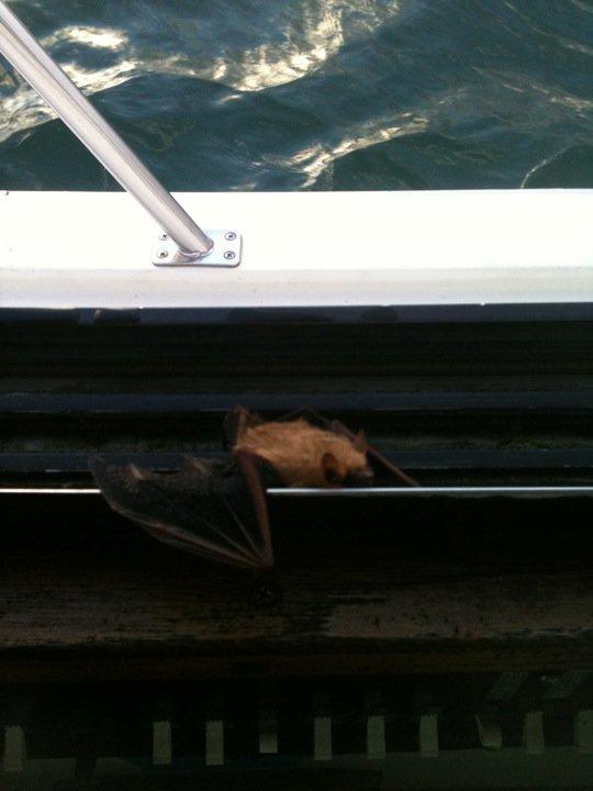 9-3 Bat.jpg