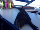 bird on board
